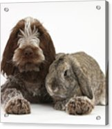 Puppy And Rabbt Acrylic Print by Mark Taylor