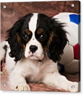 Puppy With Ball Acrylic Print by Garry Gay