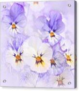 Purple Pansies Acrylic Print by Elena Elisseeva