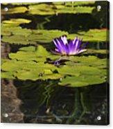 Purple Water Lilly Distortion Acrylic Print by Teresa Mucha