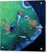 Queen Angelfish Acrylic Print by Barbara Teller
