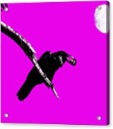 Quoth The Raven Nevermore . Magenta Acrylic Print by Wingsdomain Art and Photography