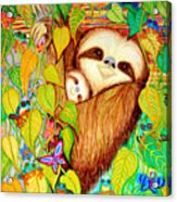 Rain Forest Survival Mother And Baby Three Toed Sloth Acrylic Print by Nick Gustafson