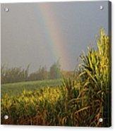 Rainbow Arching Into Field Behind Stream Acrylic Print by Stockbyte