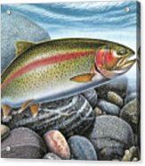 Rainbow Trout Stream Acrylic Print by JQ Licensing
