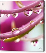 Raindrops Acrylic Print by Marilyn Hunt