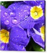 Raindrops On Blue Flowers Acrylic Print by Carol Groenen