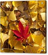 Red Autumn Leaf Acrylic Print by Garry Gay