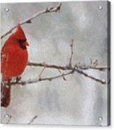 Red Bird Of Winter Acrylic Print by Jeff Kolker