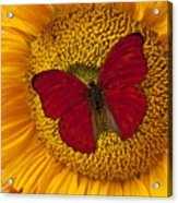 Red Butterfly On Sunflower Acrylic Print by Garry Gay