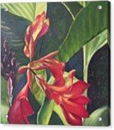 Red Cannas Acrylic Print by Deleas Kilgore