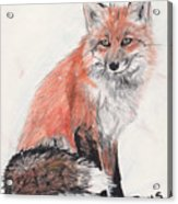 Red Fox In Snow Acrylic Print by Marqueta Graham