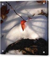 Red Leaf Acrylic Print by Marilynne Bull