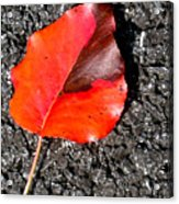 Red Leaf On Asphalt Acrylic Print by Douglas Barnett