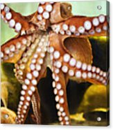 Red Octopus Acrylic Print by Marilyn Hunt