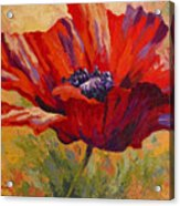 Red Poppy II Acrylic Print by Marion Rose