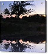 Reflecting Tree Acrylic Print by Bill Cannon