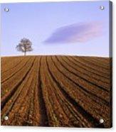Remote Tree In A Ploughed Field Acrylic Print by Bernard Jaubert