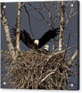 Returning Home To The Nest Acrylic Print by Mike  Dawson