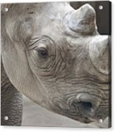 Rhinoceros Acrylic Print by Tom Mc Nemar