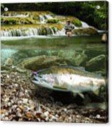 River Chrome Acrylic Print by Alex Suescun