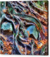 Roots And Rocks Acrylic Print by Naman Imagery