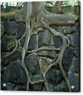 Roots And Rocks Acrylic Print by Douglas Barnett