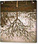 Roots Acrylic Print by Derek Selander