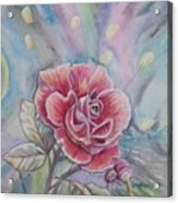 Rose Acrylic Print by Laura Laughren