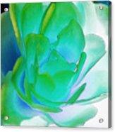 Rose Sea Acrylic Print by Lynne Furrer