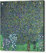 Roses Under The Trees Acrylic Print by Gustav Klimt