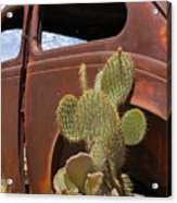 Route 66 Cactus Acrylic Print by Mike McGlothlen