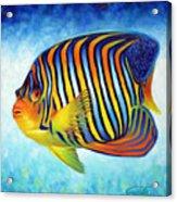 Royal Queen Angelfish Acrylic Print by Nancy Tilles