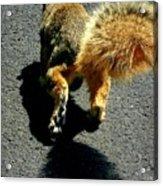 Runaway Fox Squirrel Acrylic Print by Beth Akerman