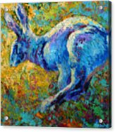 Running Hare Acrylic Print by Marion Rose