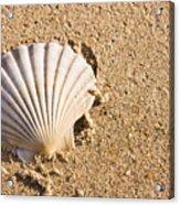 Sandy Shell Acrylic Print by Jorgo Photography - Wall Art Gallery