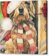 Santas Little Yelper Acrylic Print by Barbara Keith