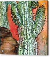 Saquaros Acrylic Print by Mindy Newman