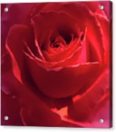 Scarlet Rose Flower Acrylic Print by Jennie Marie Schell