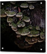 Scotopic Vision 1 - Pinecone Acrylic Print by Pete Hellmann