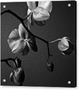 Scotopic Vision 3 - Orchid Acrylic Print by Pete Hellmann