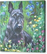 Scottish Terrier In The Garden Acrylic Print by Lee Ann Shepard