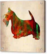 Scottish Terrier Watercolor 2 Acrylic Print by Naxart Studio
