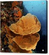 Sea Fan Coral - Indonesia Acrylic Print by Steve Rosenberg - Printscapes