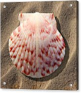 Sea Shell Acrylic Print by Mike McGlothlen