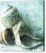 Sea Shells IIi Teal Blue Acrylic Print by Ann Powell