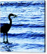 Seafood Deli Acrylic Print by Barbara  White
