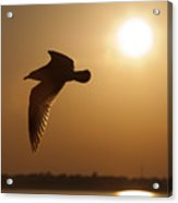 Seagull Sunset Acrylic Print by Dustin K Ryan