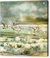 Seagulls At Sea Acrylic Print by Anne Weirich
