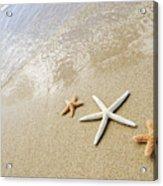 Seastars On Beach Acrylic Print by Mary Van de Ven - Printscapes